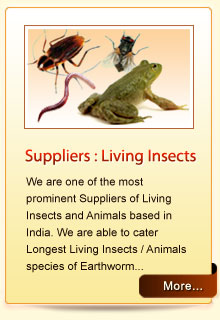 Suppliers : Living Insects